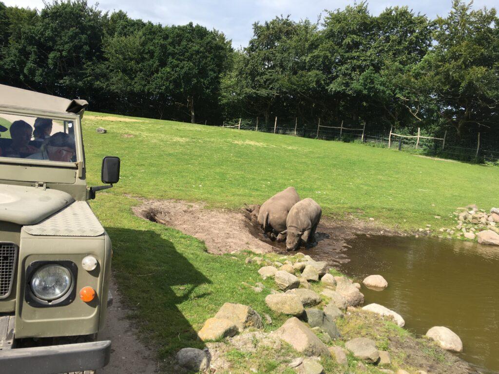 På Land Rover Safari i Ree park