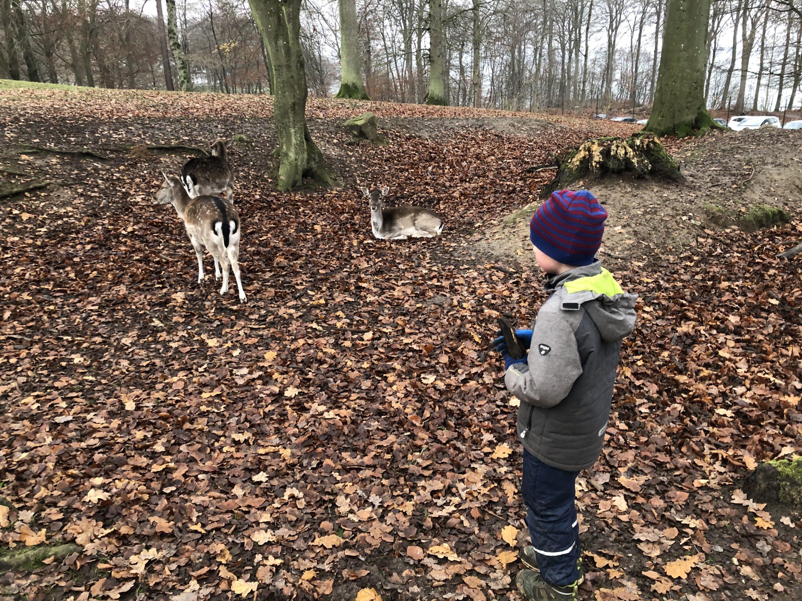 Tur i skoven med børnene