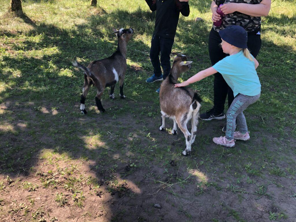 Børn er vilde med Klappedyr i WOW Park