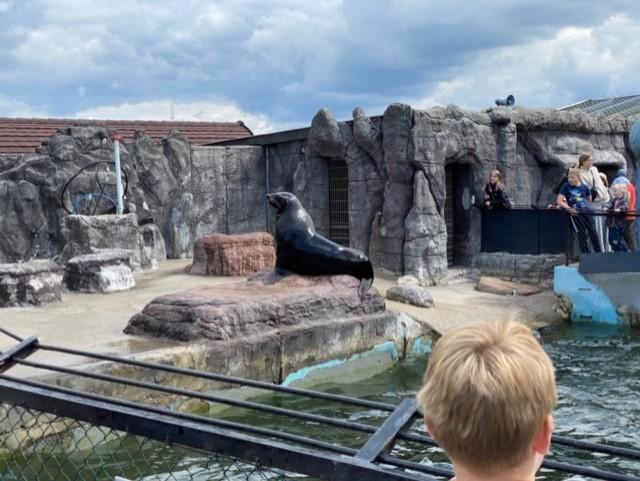 Søbjørn I Jyllands Zoo