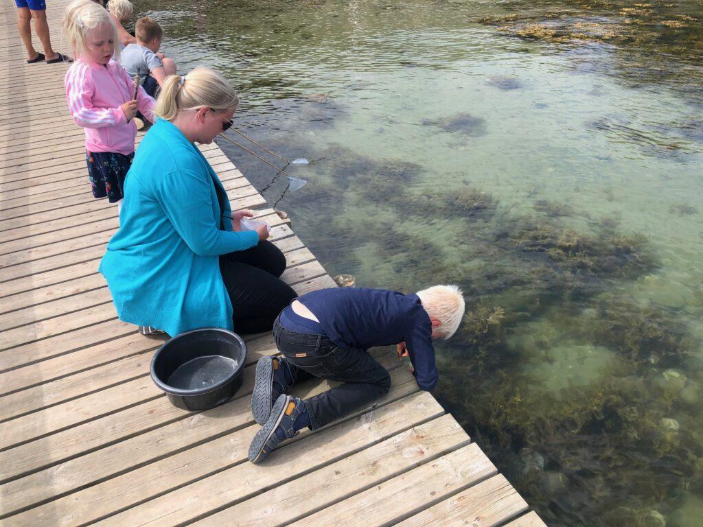 Fanger krabber på Bøsøre Strand Feriepark med børn