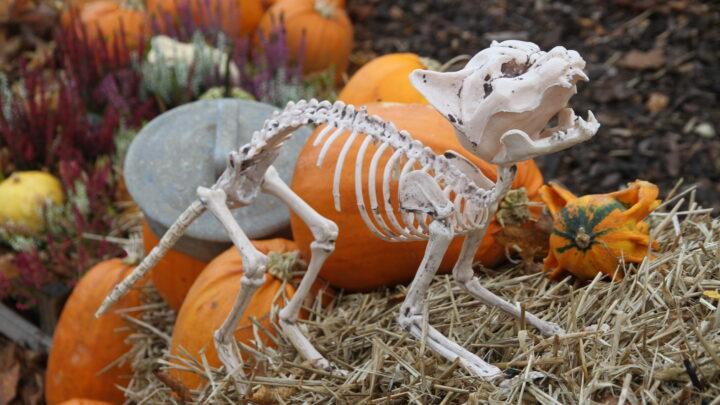 Knogleskør efterårsferie i Givskud Zoo