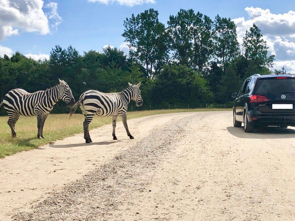 På safari i egen bil (Foto: Ferie og Børn)