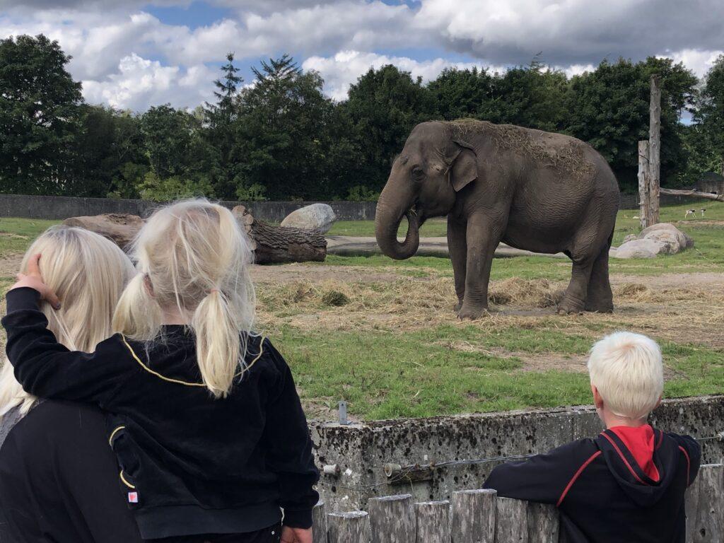 Vi kommer helt tæt dyrene i Givskud Zoo (Foto: Ferie og Børn)