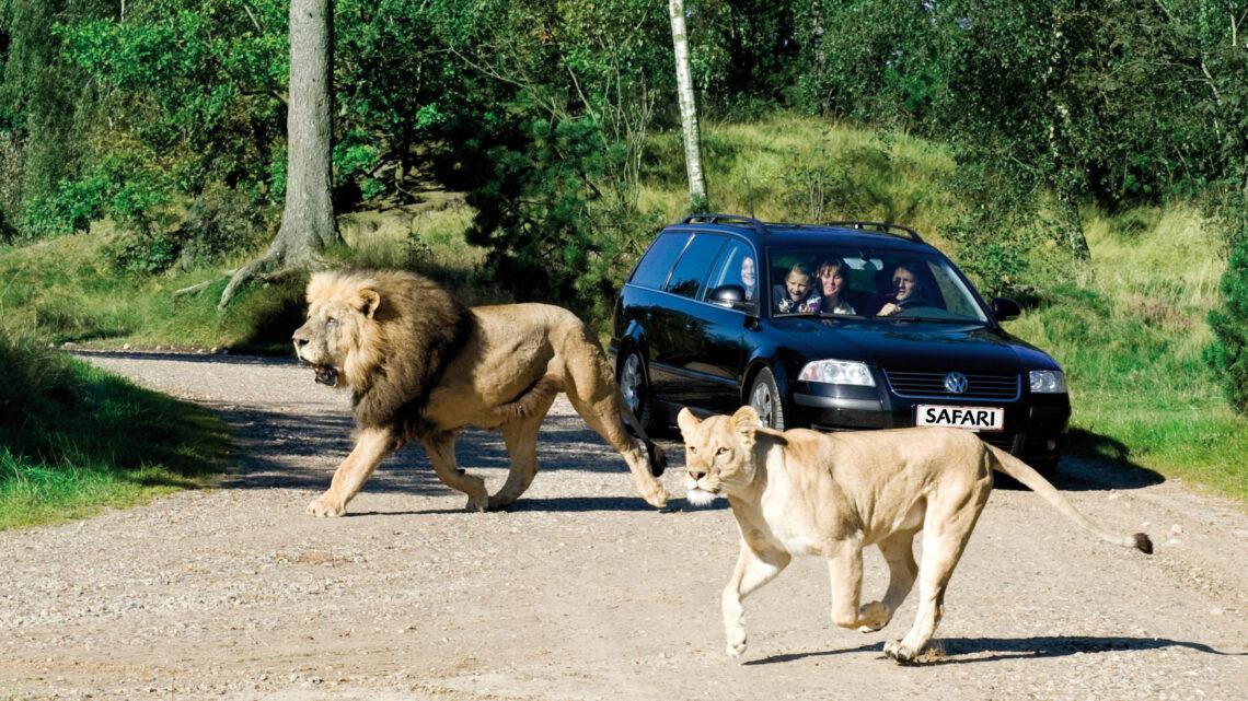 Givskud Zoo – En dyrepark perfekt for børn