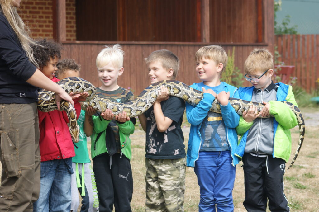 Stor slange fra Blåvand Zoo
