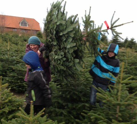 Fælde juletræ med børnene (Foto: Ferieogbørn.dk)