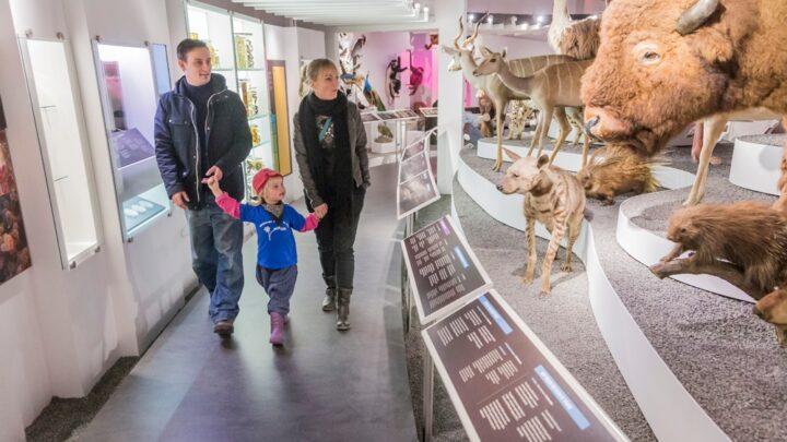 Naturhistorisk Museum Aarhus