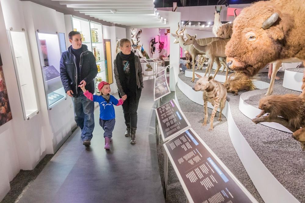 Naturhistorisk museum Aarhus (Foto: Naturhistorisk museum Aarhus)