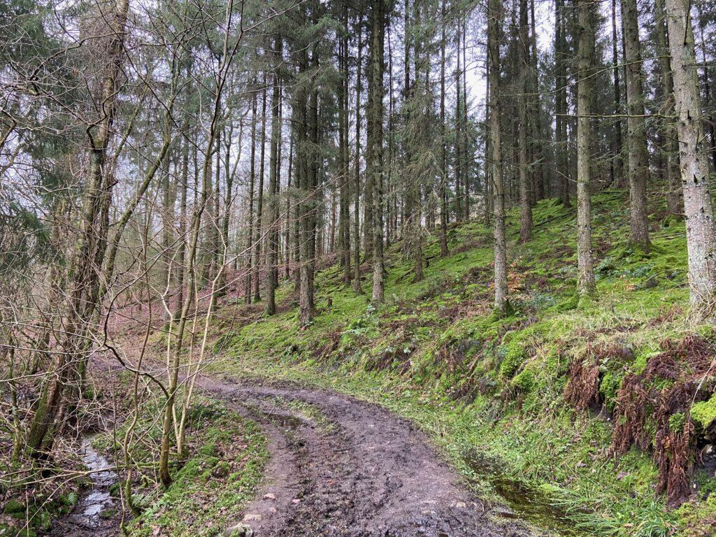 Skovstier langs Gudenåen ved Den Genfundne Bro (Foto: Ferieogborn.dk)