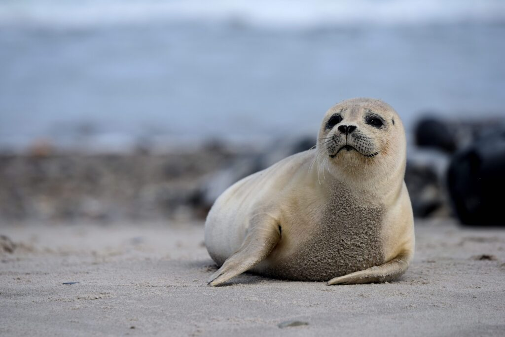 Vadehavet med dets spændende dyreliv er blevet et must see for besøgende i Ribe og omegn (Foto: PR)