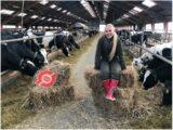 Økodag online – Køer på græs