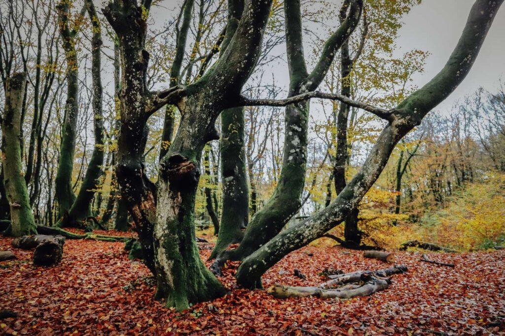 Naturrig overnatning i Rold Skov i hængende telte (Foto: VisitNordjylland)