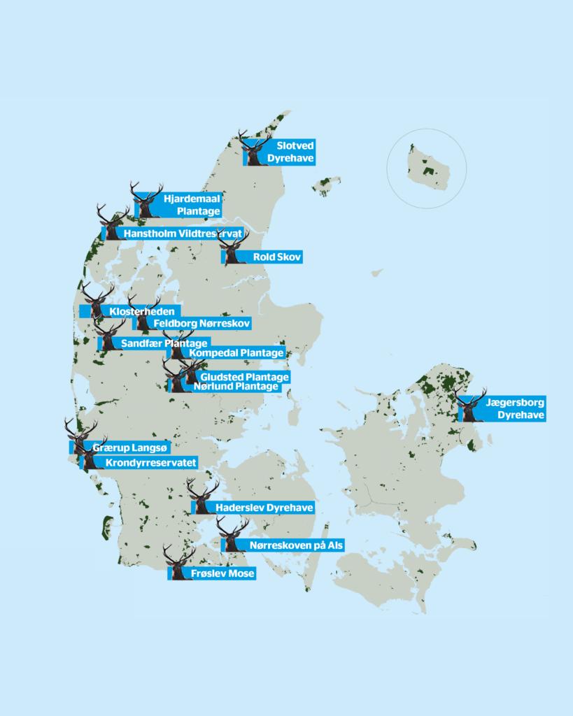 Oversigt over udvalgte steder man kan opleve Kronhjorte i Danmark (Foto: Naturstyrelsen)